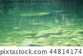 강, 하천, 기후 현 44814174