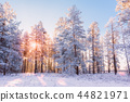 forest,snow,snowy 44821971
