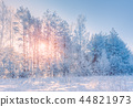 forest,snow,snowy 44821973