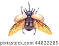 Dynastinae on white background 44822285