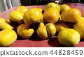 persimmon, fruit, deciduous 44828459