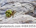 Okinawa Ishigaki Island driftwood and okayadokari 44843056