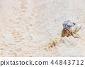 오키나와 이시가키 섬 해변과 뭍 집게 속 남국 이미지 44843712
