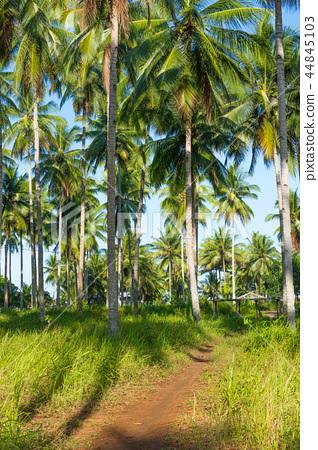 椰樹樹皮 44845103