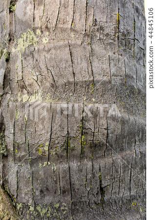 椰樹樹皮 44845106