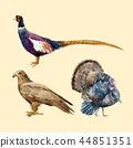 雉科鸟 鸟儿 鸟 44851351