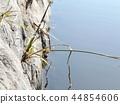 damselfly, bug, hexapod 44854606