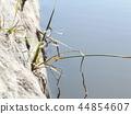 damselfly, bug, hexapod 44854607