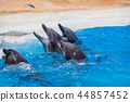 Group of dolphins during feeding. 44857452