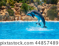 Show of beautiful dolphin jumps in zoo pool. 44857489