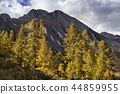 larch, forest, woods 44859955