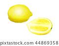 檸檬 水果 柑橘 44869358
