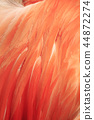 Flamingo feathers 44872274