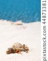 海 貝類 夏天 44873381