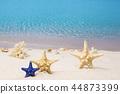 沙灘 海 貝類 44873399
