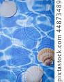 海 貝類 暑假 44873489