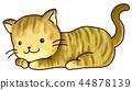 고양이 색상 꿩 호랑이 무늬 44878139
