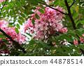 vermilion flamboyant tree 44878514