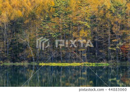 어 射鹿 연못의 단풍 44883060