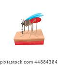 蚊子 昆蟲 向量 44884384