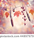 Autumn composition on colorful background 44897979