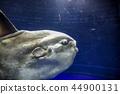 [Tokyo] Ikebukuro / Sunshine City Aquarium / Manbo 44900131