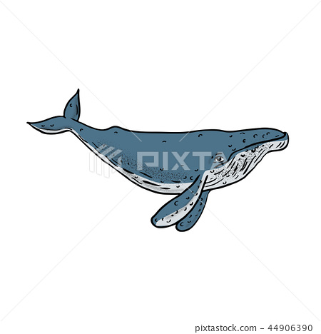 Humpback Whale Color Drawing 44906390