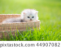 Cute kitten playing in wicker basket 44907082