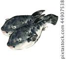 Puffer fish 44907538