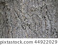 Bark of the Ginkgo bark 44922029