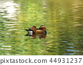 mandarin duck pond 44931237