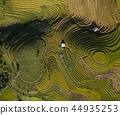 Vietnam landscapes with terraces rice field 44935253