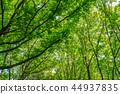 자연 이미지 44937835