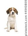 小狗 动物 狗 44940809