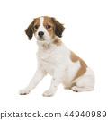 小狗 动物 狗 44940989
