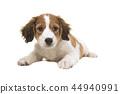 小狗 动物 宠物 44940991