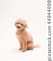 坐和笑的玩具獅子狗 44944098