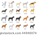 Dogs breed vector flat icons set 44946074