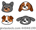 狗的臉 44946199