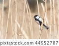 bird, birds, fowls 44952787