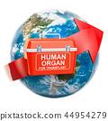 Global donation and transplantation human organs 44954279
