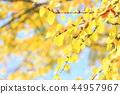 가을 경치 노란색 일색 44957967
