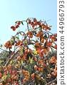 พลับญี่ปุ่น,ผลไม้,ต้นไม้ 44966793