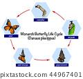 蝴蝶 生命 周期 44967401