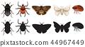 insect bug beetle 44967449