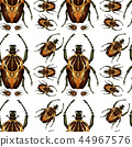 beetle bug insect 44967576