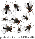 insect vector fly 44967584