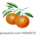 오렌지 일러스트 44968970