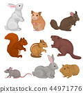 Cute rodents set, small wild and domestic animals vector Illustration on a white background 44971776
