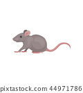 mouse mice rat 44971786